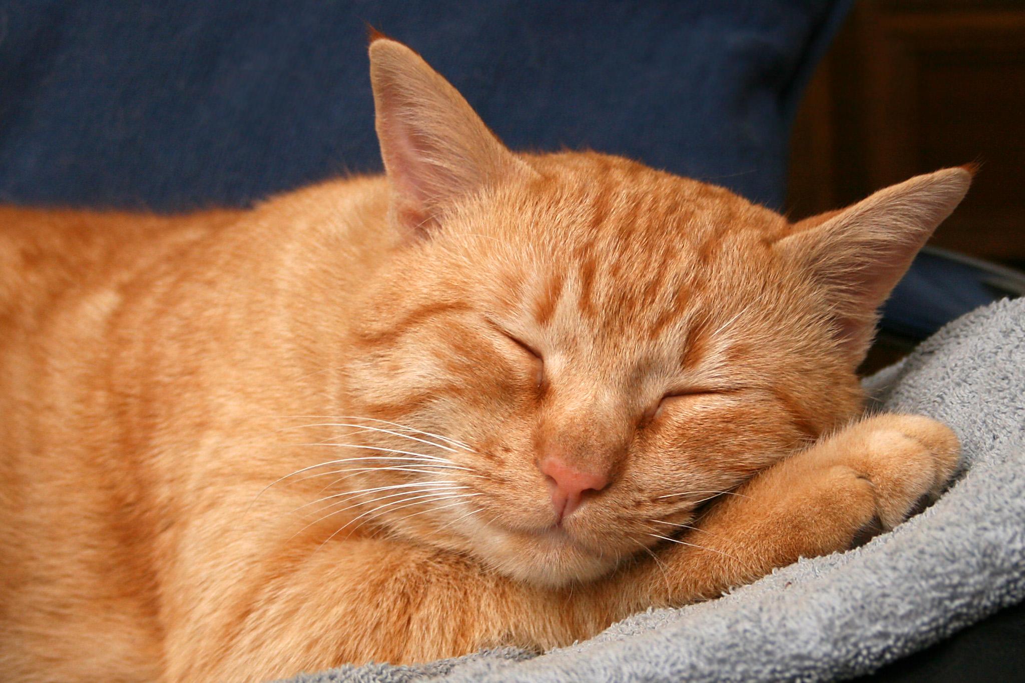 grep-mot-søvnløshet
