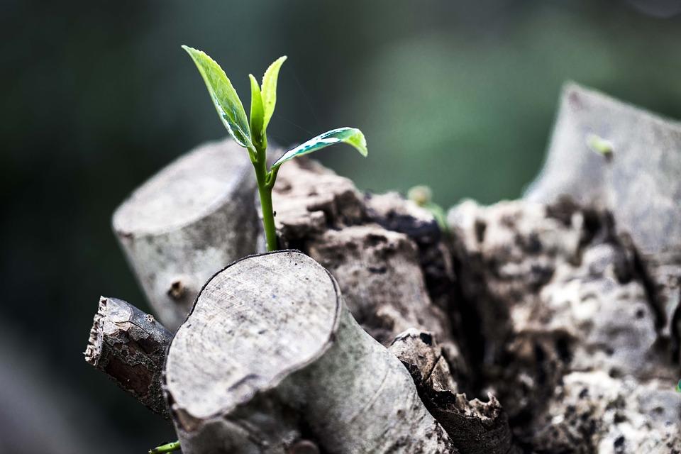 hvordan bygge et nytt liv